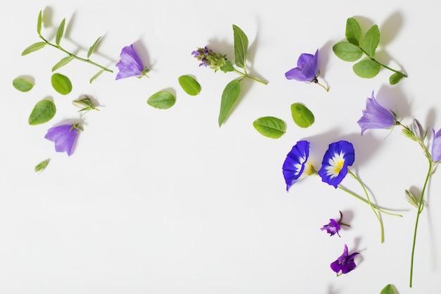 Fleurs d'été bleues sur fond blanc