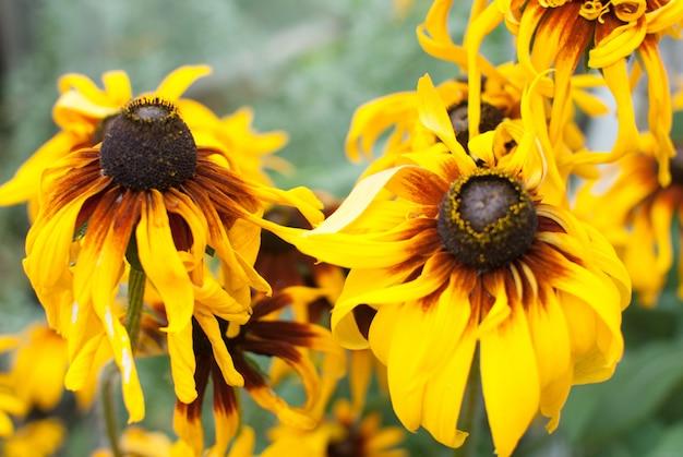 Fleurs d'été jaune en plein jour