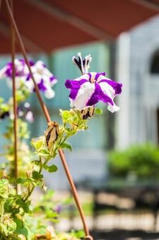 Fleurs d'été suspendues