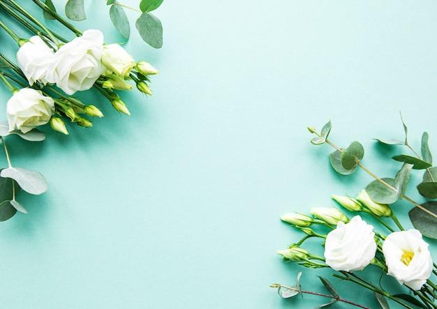 Fleurs d'eustoma blanches sur fond vert
