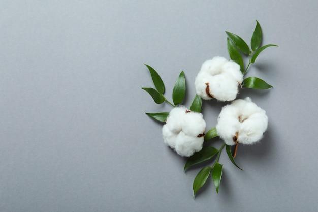 Fleurs et feuilles de coton sur fond gris