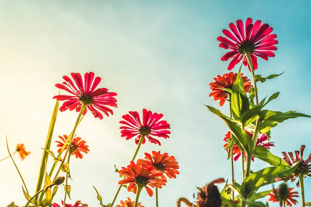 Fleurs de fleur rose dans un jardin