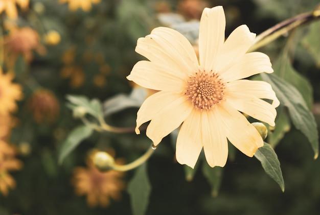 Fleurs fleurissent le matin