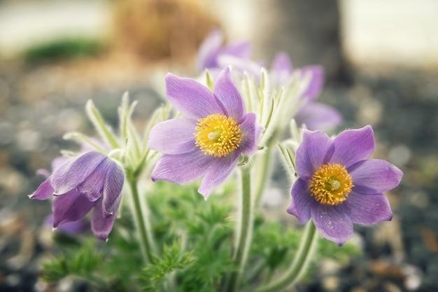 Fleurs En Floraison Photo gratuit
