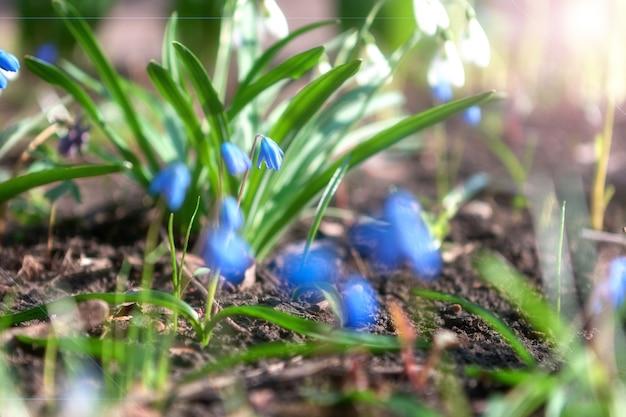 Fleurs floues à la lumière du soleil douce.