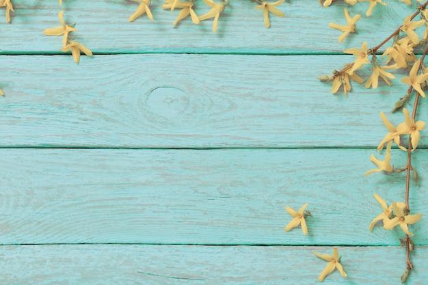 Fleurs de forsythia sur fond de bois bleu menthe