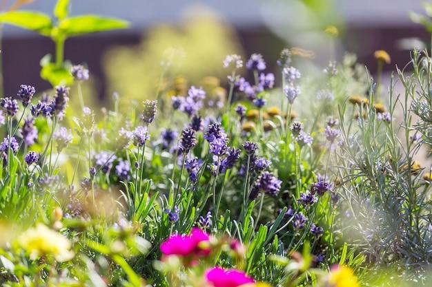 Fleurs fraîches étonnantes dans le jardin d'été
