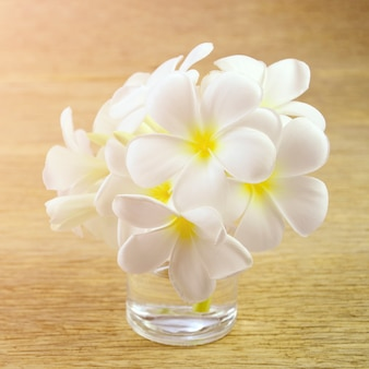 Fleurs de frangipanier blanc avec des tons chauds.
