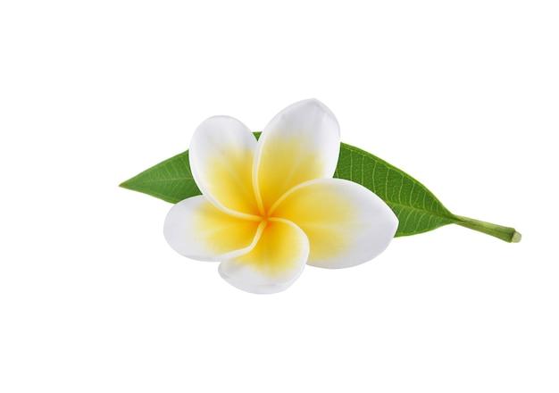 Fleurs de frangipanier avec des feuilles isolées sur blanc