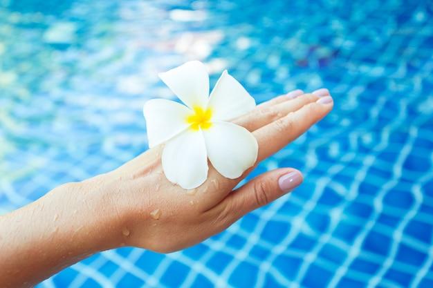 Fleurs de frangipanier flottant dans la piscine
