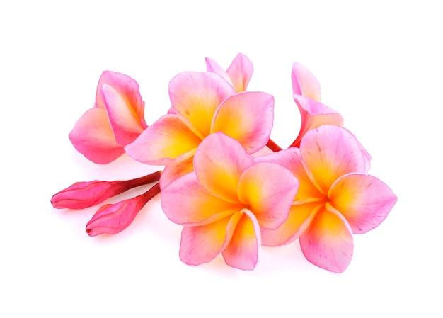 Fleurs de frangipanier isolés sur fond blanc