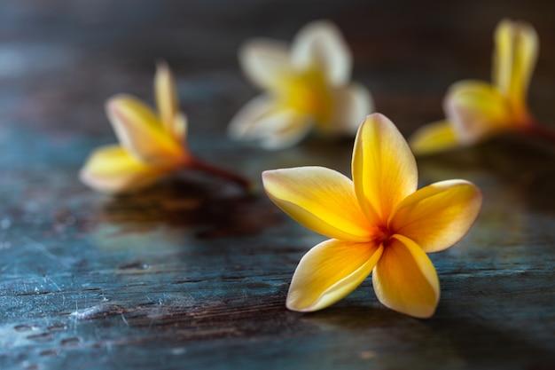 Fleurs de frangipanier jaune (plumeria) sur fond en bois bleu foncé