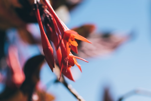Fleurs fucsia au printemps