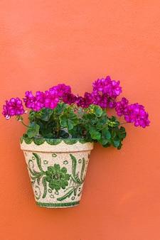 Fleurs de géranium violet en fleurs