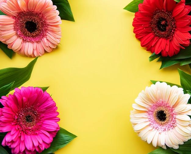 Fleurs de gerbera sur jaune. vue de dessus