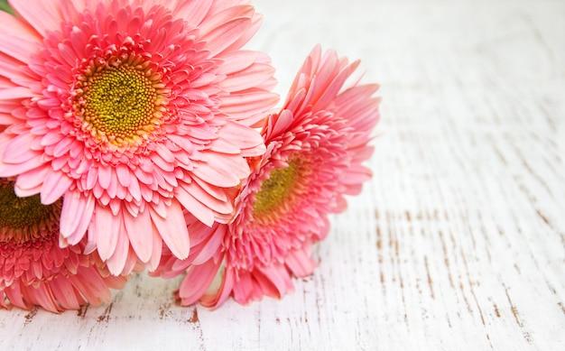 Fleurs de gerbera rose