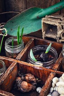 Fleurs germées dans des bocaux en verre