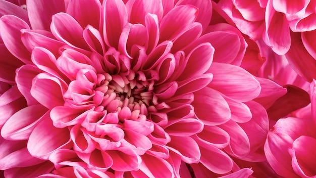Fleurs en gros plan avec des pétales roses
