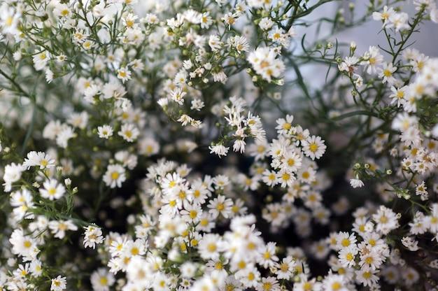 Fleurs, gypsophila, belle, pour l'amour, la publicité et l'espace de texte