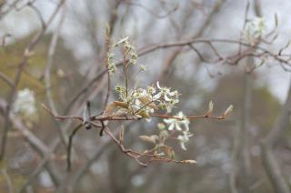 Fleurs halte 1