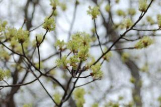 Fleurs halte 2