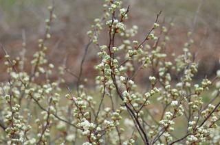 Fleurs halte 3