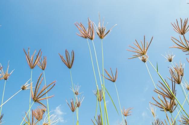 Fleurs d'herbe