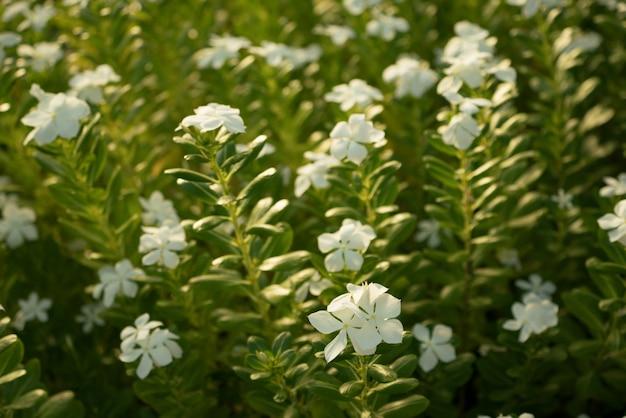 Fleurs. image de tons chauds de fleurs. le soleil du matin brille sur les fleurs. mise au point sélective sur les fleurs avant.