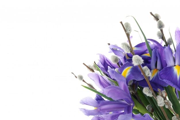 Fleurs d'iris et branches de saule isolé sur une surface blanche