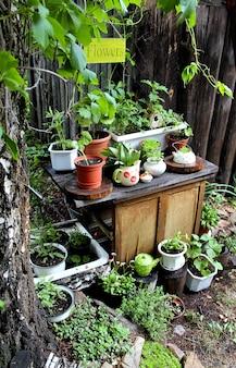 Fleurs de jardin d'été en pots