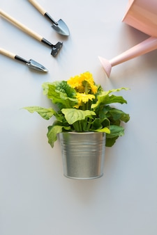 Fleurs de jardinage en pot et arrosoir sur fond gris.