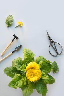 Fleurs de jardinage en pot, ciseaux et outils sur fond gris. l'été et le printemps travaillent dans un jardin de fleurs.
