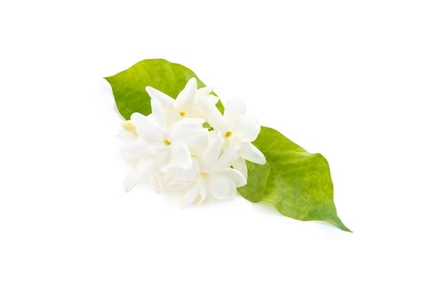 Fleurs de jasmin blanc avec des feuilles sur fond blanc, amour pur