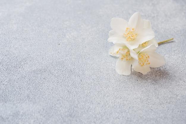 Fleurs de jasmin blancs sur une surface de béton grise