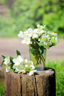 Fleurs de jasmin en fleurs. mise au point sélective. fleurs nature.
