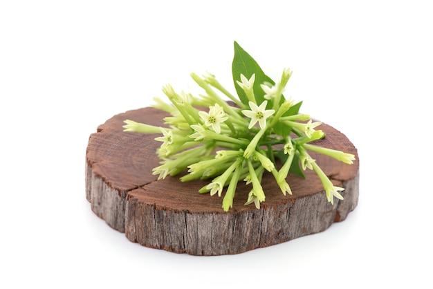 Fleurs de jasmin à floraison nocturne ou de cestrum nocturnum isolées sur fond blanc.