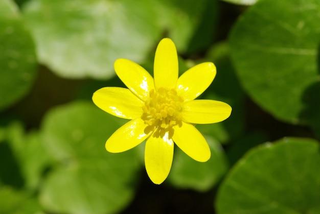 Fleurs jaunes abstraites sur terrain