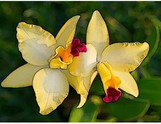 Fleurs jaunes croquis