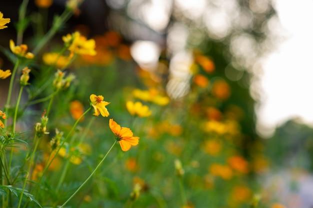 Fleurs jaunes dans un beau jardin fleuri, gros plan avec bokeh