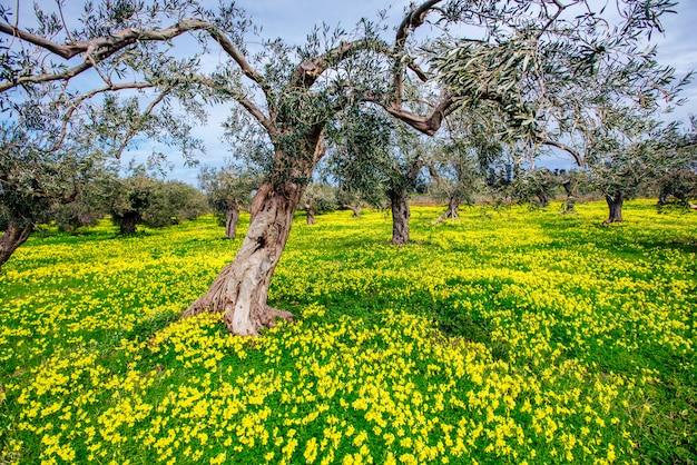 Fleurs jaunes dans le jardin
