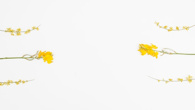 Fleurs jaunes flatlay