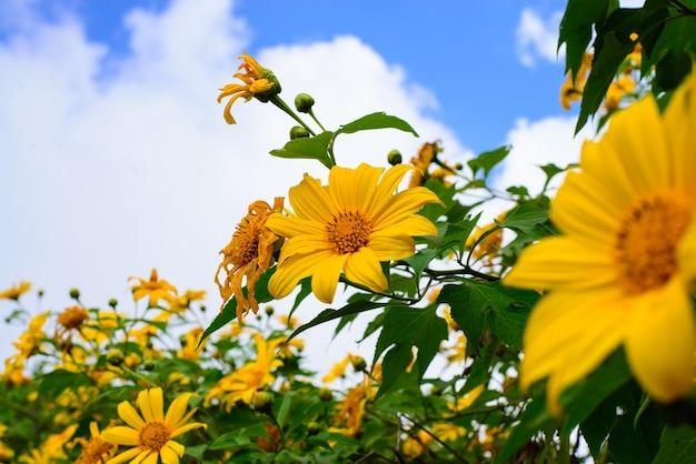 Fleurs jaunes avec fond de ciel
