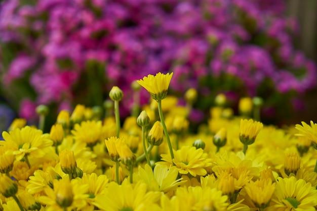 Fleurs jaunes avec fond défocalisé