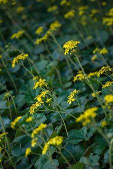 Fleurs jaunes sur fond vert feuilles