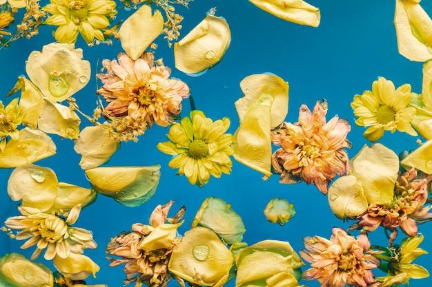 Fleurs jaunes plates dans l'eau