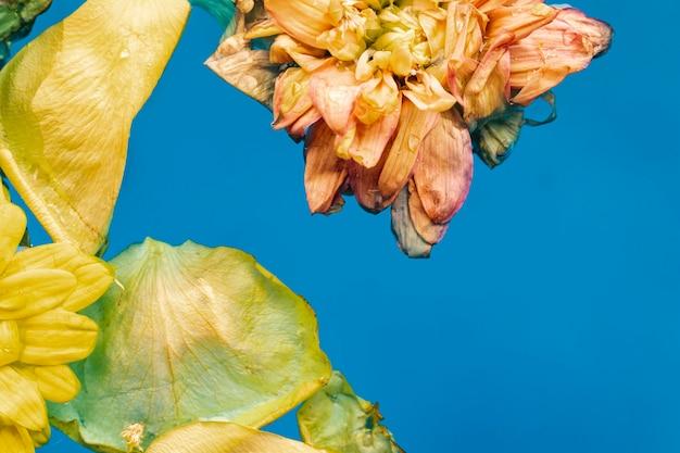 Fleurs jaunes plates en gros plan de l'eau