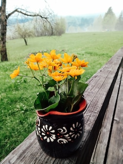 Fleurs jaunes sauvages en cruche jardin d'été