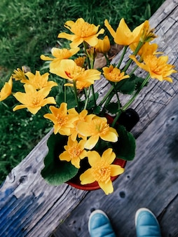 Fleurs jaunes sur le terrain dans un vase jardin d'été