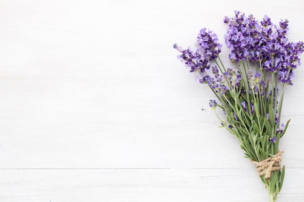 Fleurs de lavande sur fond blanc.