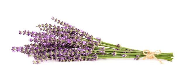 Fleurs de lavande, isolés sur fond blanc. bouquet de fleurs de lavande ou de lavande. herbes medicinales.